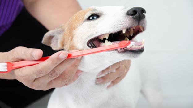 dog dental hygiene tips from pinnacle veterinary center in santa clarita california